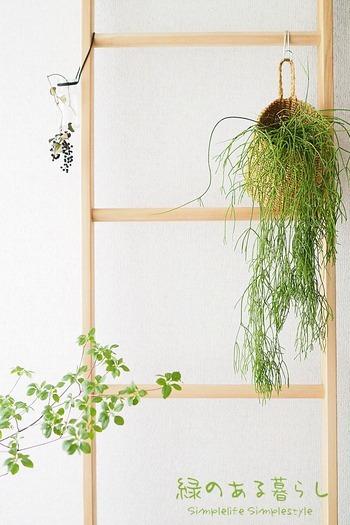 """「つる」などが垂れているタイプの観葉植物は、置くよりも""""吊り下げる""""ことで美しさが際立ちます。グリーンのナチュラル感を引きたてる取っ手付きのかごに入れて吊るして。  写真のフレッシュなグリーンは「リプサレス(サボテン科」だそう。植物を育てるのが苦手な方は、フェイクグリーンを使ってもいいですね。"""