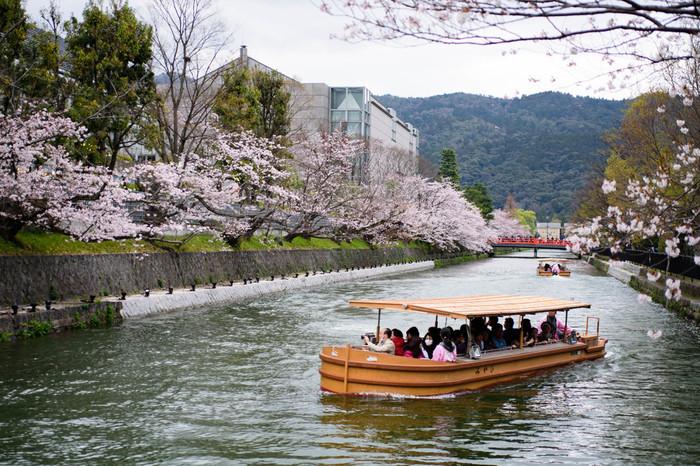 桜の季節には、舟にのって岡崎疏水からお花見が楽しめます。南禅寺舟溜り乗船場~夷川ダムを往復する約25分3kmのコースで、舟の運航は3月下旬~5月初め。期間中ライトアップもあり、美しい夜桜も眺められます。