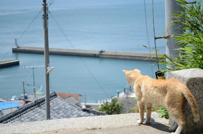 坂道に点在するアート作品を探しつつ、男木島独特の風景も楽しみましょう。  男木島には猫もたくさんいます。歩いているとこんなかわいい猫に出会えるかも?