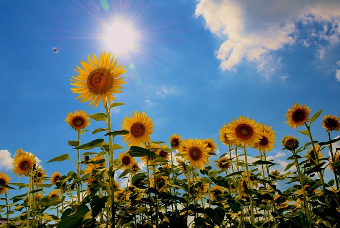 暑~い夏がやってきますね!うだるように暑い日は、のどこしのよいさっぱりとしたものが食べたくなるものです。
