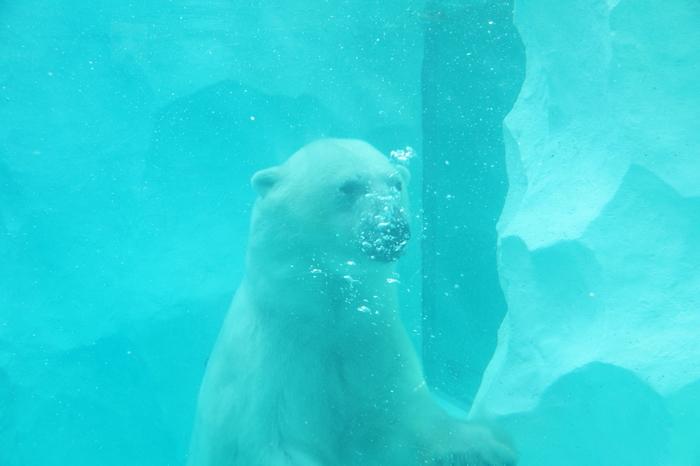 そして水中からご対面。悠々と泳ぐ姿に癒されそう。