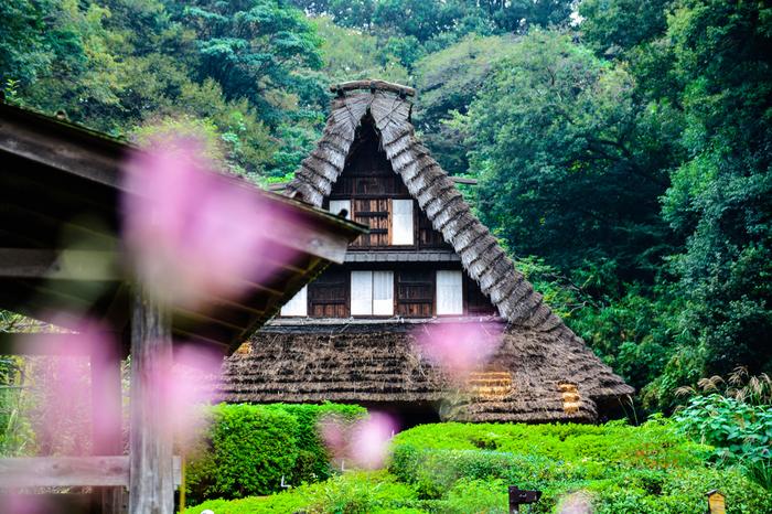 のどかな光景が広がる川崎市の生田緑地にある川崎市立日本民家園。200~300年前の歴史ある古民家を永く将来に残すことを目的として、昭和42年に開園された野外博物館です。