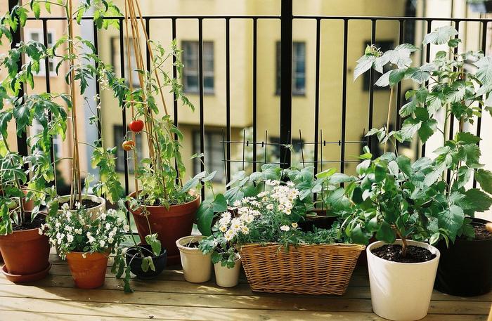 """""""コンパニオンプランツ""""って何?一緒に植えるとお互いをサポートする植物と仲良しレシピ集"""