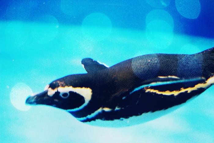イルカ以外にも、アザラシにタッチできたり、ペンギンやリクガメに餌やりができるイベントもあります(いずれも有料)。1歳以上から参加できるので、小さいお子さんには特にいい思い出になりそうですね。