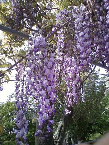 また、桜が多く植えられているためお花見の名所となっている他、梅林、藤棚、花の散歩道など季節ごとに花々を楽しむことができます。