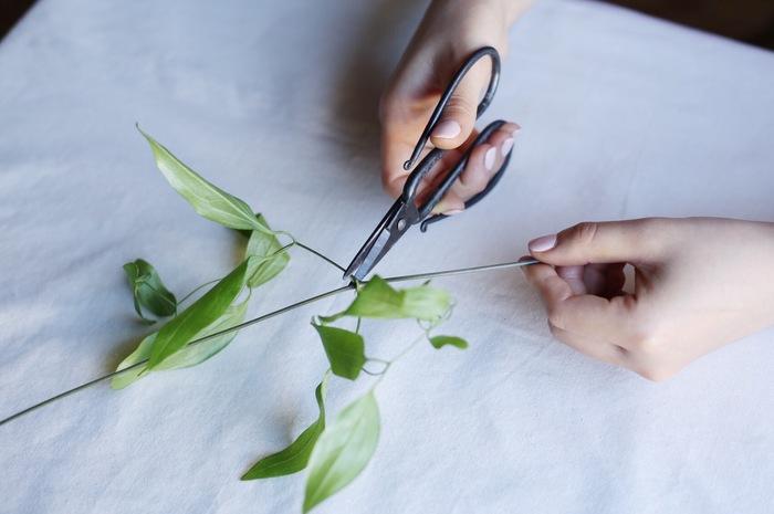 ②一本の太い茎から自由に枝分かれしたツル。活けたときに、水に浸かってしまうような細かなものは先に切り落としておきましょう。葉が水に浸かったままになっていると、そこからバクテリアが繁殖しお花が痛んでしまう原因になるそう。