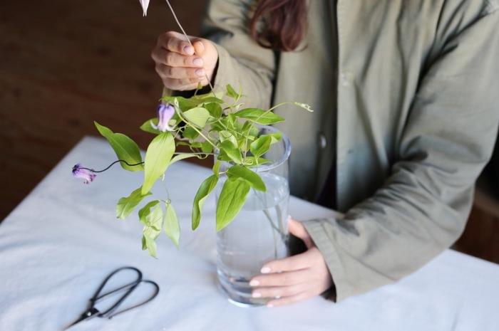 花瓶の長さとお花の長さを調節したら早速、水の入った花瓶へ活けましょう。流れるように自由に伸びたツルがクレマチスの魅力なので、自分の思い通りにきっちり整えようとせずに、ラフにふんわりと、より自然体で活けてあげることがポイント。一本一本、花姿が違うのでそれぞれ長さを変えて活けてあげると美しく仕上がりますよ。  ※花瓶と花瓶の口から出ているお花の比率は1:1がベスト。実際に活けてから、イメージに合わせて調整できるように少し長めにカットしておくのもポイントです。