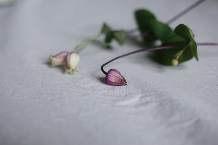③また、脇から伸びた蕾から花が咲くこともあるので他のお花が散ってしまってもその部分だけカットして、飾ってあげてくださいね。