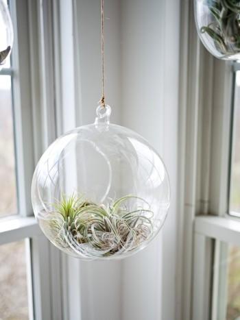 エアプランツはガラスに入れて。涼やかで透明感のあるガラスはインテリアに華を添えてくれます。