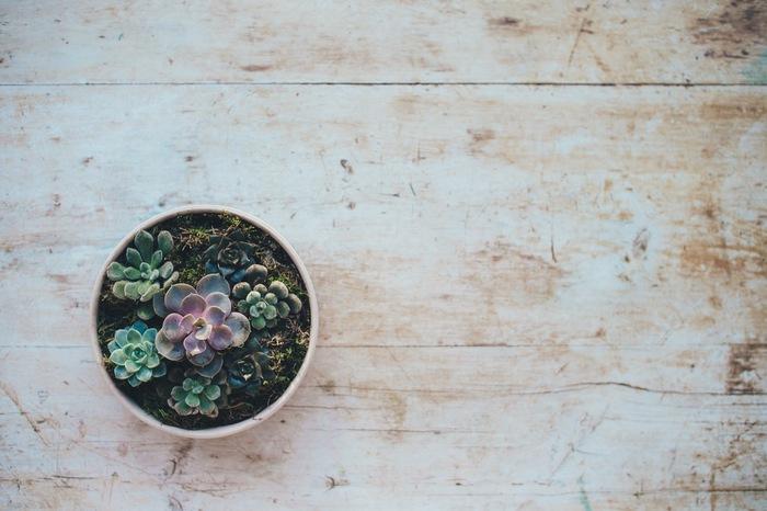 ふと覗いた花屋さんで出会う新しい植物。おもわず買ってしまってから飾る場所に困った経験はありませんか?置く場所は限られていても欲しくなるのが植物の魅力ですよね。
