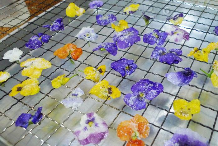 1.花びらを水でやさしく丁寧に洗ったら、よく乾かします。キッチンペーパーの上に並べると乾きがよいです。  2.水気がなくなったら、溶きほぐした卵白をハケなどを使って両面に塗ります。表も裏も丁寧につけてくださいね。  3.全体にグラニュー糖をまぶしたら、重ならないように並べます。クッキングペーパーの上などでもOK。くっつかないように並べることがポイントです。  そのまま自然乾燥で乾くのに大体、2.3日くらいかかります。触ってみて硬くなっていれば完成です♪