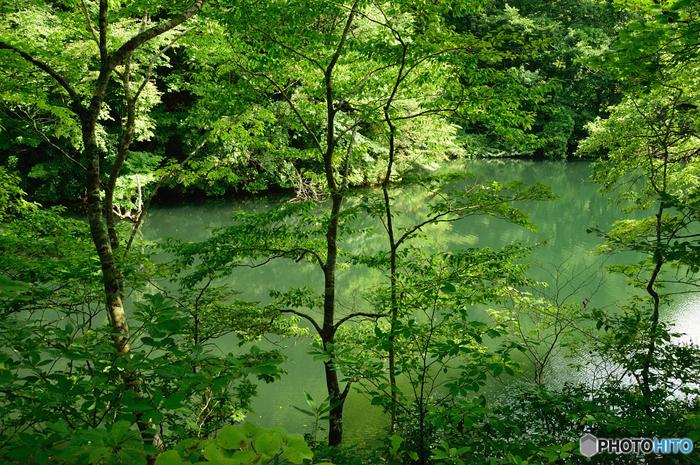 エメラルドグリーンの水面を持つ中の池は、水深14.4メートルを誇ります。池を取り囲む樹々の緑と、水面の碧が見事に調和した中の池は、まるで森の妖精の棲家であるかのようです。