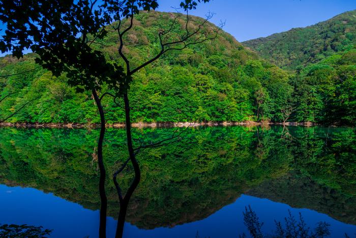 41150平方メートルの湖面積を誇る鶏頭場の池は、十二湖の中でも大きな池です。池の周りには、豊かなブナの原生林が生い茂っています。深い緑の山々を鏡のように映し出す鶏頭場の池では、「逆さブナ林」を臨むことができます。