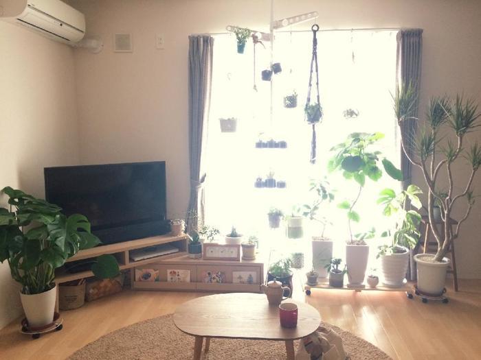 観葉植物とは、葉の美しい色や形を観賞する植物のことで、主にお部屋の中で育てる植物のことをいいます。お部屋に一つ植物があると、心が癒されますよね。植物を育てるのが苦手…という方も大丈夫!簡単に育てられる強い観葉植物もあるんですよ。今回は、観葉植物を上手にインテリアに取り入れるためのアイデアやヒントをご紹介していきたいと思います。