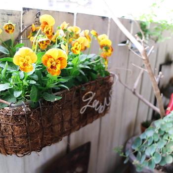こちらはワイヤーを使ってDIYされたプランター。吊るしプランターの良いところは、  ・下に置かないので床面積を狭めない ・目線の高さに花を持ってこれるので、お部屋からも季節の花を楽しめる  ということ。ほしい場所にピッタリサイズのプランターをつくることができますね♪