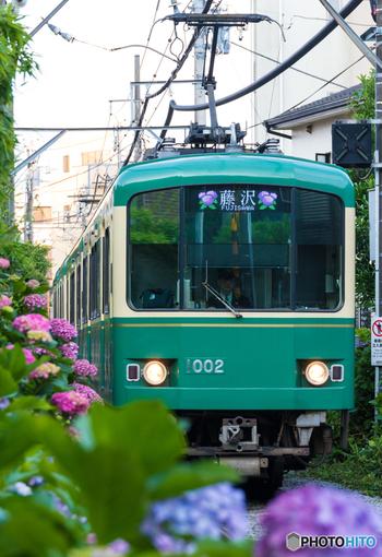 花の名所として知られている鎌倉。鎌倉といえば桜やあじさいが有名ですが、有名なバラの名所もあるんです!