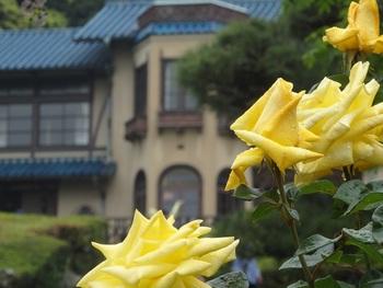 こちらは地名がそのまま「鎌倉」と名付けられたバラだそうです。淡い黄色が素敵ですね☆洋館をバックに見ると、美しさがよりいっそう際立ちます。