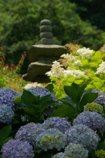 光則寺は「花の寺」として知られ、とくに天然記念物のカイドウの古木は有名です。四季折々にいろんな種類の花を楽しむことができます。