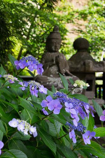 東慶寺 かつては「駆け込み寺」と呼ばれていて、女性を救済するための尼寺でした。北鎌倉の花の寺としても知られています。