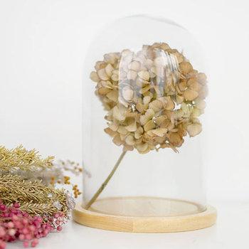「ガラスドーム」はいくつかのメリットがあり、あなたらしいインテリアをさらに楽しませてくれるおすすめのアイテムです。きっと「もう一声欲しい」空間にアクセントを加えてくれるはず。ぜひあなたも「ガラスドーム」を使ったインテリアを楽しんでみませんか?