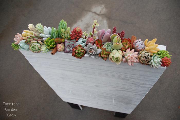 ひとくちに多肉植物と言っても、個性はまさに千差万別。寄せ植えにするとまるでカラフルな花束のようです。サボテンや多肉植物ならではの、ユニークな魅力について見ていきましょう。