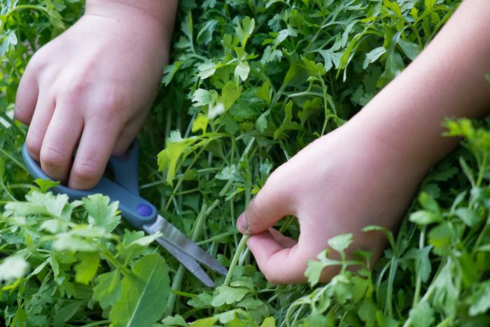 お庭やベランダで、野菜やハーブを育てるのも良いですね。無農薬の食物が身近になるなんて素敵です。