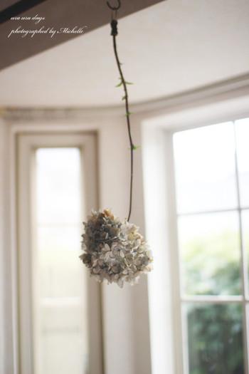 1本吊るしておくだけでも絵になるアジサイのドライフラワー。儚げでナチュラルテイストのお部屋との相性もバッチリです。
