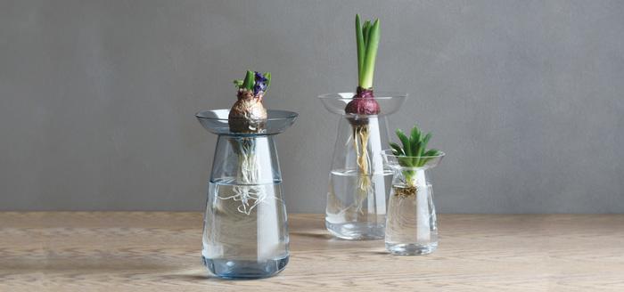 【KINTO(キントー)】の「AQUA CULTURE VASE(アクア カルチャー ベース)」は、水耕栽培用のガラスベース。球根や植物を固定する受け皿が付いており、いろいろな形状の植物を育てることができます。