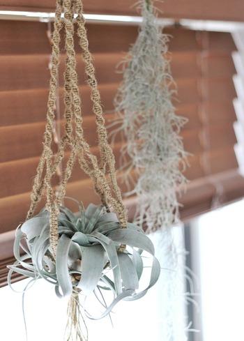 自作が簡単に出来て、使う素材や色で楽しめるプラントハンガー。何をどこに吊すかもその時の気分で自在に変えられるので、気軽に飾れます。お部屋にグリーンを取り入れたい時や増やしたい時、ぜひ取り入れてみてください。