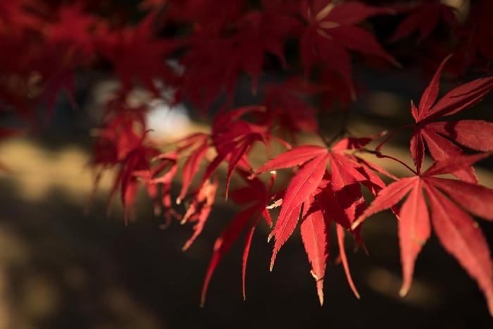 四季折々の自然散策スポットを見つけるものいいかもしれません。春はさくら、初夏はあじさい、秋は紅葉など、四季のある日本に住んでいることを感謝したくなります。