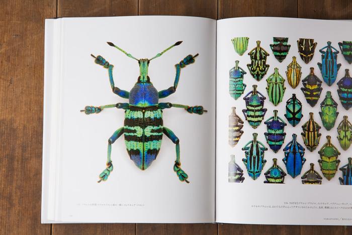 色とりどりの昆虫たちがアートのように美しい図鑑。『世界一うつくしい昆虫図鑑』(宝島社)