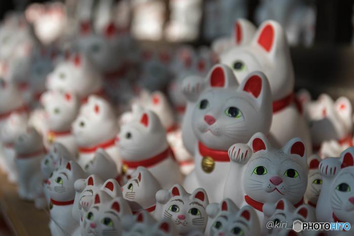 「招き猫発祥の地」の1つとされる豪徳寺は、招福殿の左手に招き猫がたくさん奉納されています。豪徳寺の招き猫は、右手で招いているのが特徴で、奉納猫は300円から購入できるそうです。