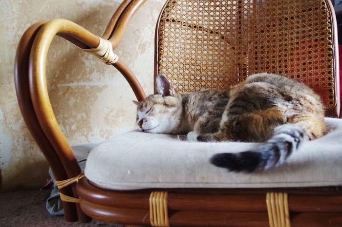 動物を見ていると、いつの間にか疲れもとれて、心が安らぎます。