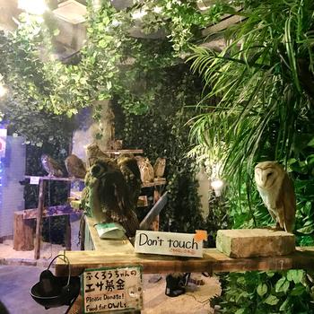 アウルの森【浅草新仲見世通り店】では、まるでジャングルのような店内でフクロウや動物たちと触れ合えます。