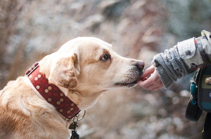 子犬の頃はリードを見せるだけではしゃぎまわって飛び跳ねて、全身でお散歩の喜びを表してくれたあなた。どこまでも一緒に歩いて行ったよね。今は穏やかに同じスピードで歩いて、じっくり匂いを嗅いで、ゆっくり景色を楽しめるようになったね。