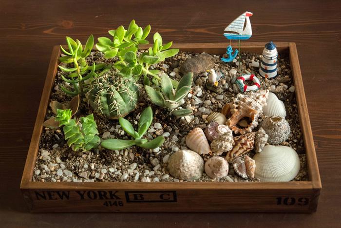 貝殻だけではなく、ヨットなど海に関する雑貨やサボテンを使って箱庭を作ってみてはいかが。