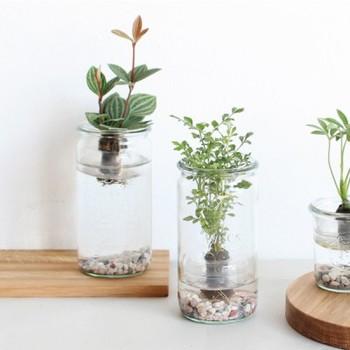 こちらも同じく「WECK」のキットです。ぽってりと厚みのあるWECKの瓶の中で観葉植物が水の中でウキをつけて浮いている様子が楽しめるフローティングプランツです。水替えのお手入れは週1回だけで、とっても簡単!透明感のある涼しげなグリーンは夏にぴったり♪