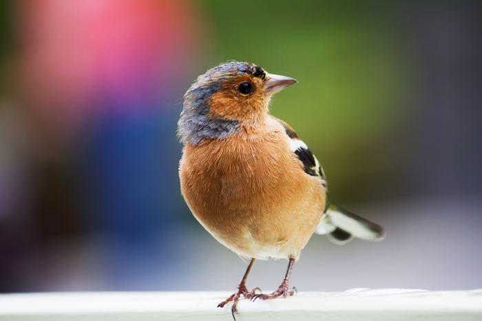 鳥と会話ができちゃう<バードコール>を持ってお出かけしよう♪