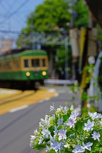 予定のない休日、時間もお金もない...とあきらめるのはまだ早い!東京から約1時間でいける古都・鎌倉であれば、ふらっと気ままな半日旅行がかないます。  鎌倉の街にはおしゃれなカフェ・レストランが紹介しきれないほど集中しています。食べるために鎌倉に行かれる方も多いのでは。この記事では、その中でも特に自然に囲まれたロケーションに佇み、美しく整えられた歴史を感じる庭、太平洋の水平線が見えるテラスなどを備えた、自然に包まれる感覚を味わえるカフェ・レストランをまとめてみました。