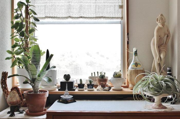 サボテンは日光がよく当たる場所が大好きです。寒い冬には窓辺で日光浴をさせてあげると良いですね。逆に真夏の直射日光は、暑さに強いサボテンとはいえ日焼けを起こすことがあります。レースのカーテンで陽射しを和らげたり、置く場所を明るい日陰に移動するなどの配慮が必要です。