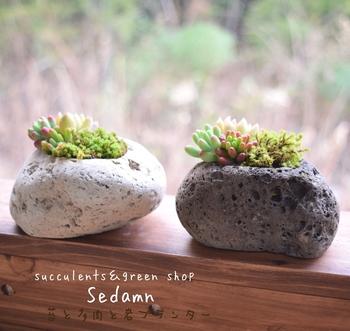溶岩石の器に植えられた多肉は、まるで苔むした自然の風景を切り取ったかのよう。窓辺に置いておくだけで絵になるインテリアです。