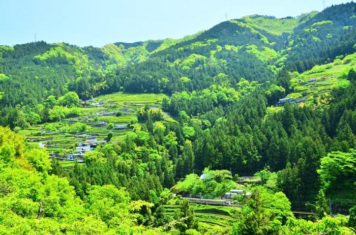 遠くから臨む中井侍駅周辺に広がる風景の素晴らしさは格別です。林に囲まれ人里から孤立した小さな駅、緑豊かな森を抱く山、周囲に広がる茶畑が織りなす景色は、絵画のようです。