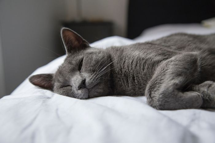 就寝中はからだを動かさないので、寒さを感じやすいです。 暑いからとエアコンの設定温度をそのままで寝てしまうと、肌寒くて起きてしまうことも。 寝るときは、いつもより+1~2度、少し暑いと感じる程度に設定して寝ましょう。