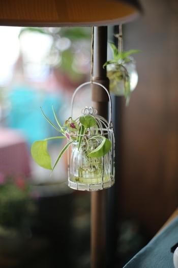 カゴの間から伸びる植物が作りすぎない自然な雰囲気を感じさせ、とても素敵です。
