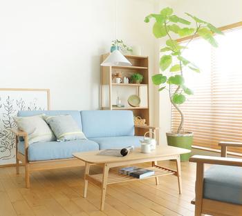 シンプルなお部屋に、「ウンベラータ」などのインパクトのあるグリーンを取り入れるのもおすすめです。大きなグリーンをひとつ取り入れるだけで、お部屋全体の印象がガラリと変わります。鉢とセットで販売されているものを購入して、そのままお部屋に置くだけでOKです。テクニックいらずで、洗練された空間に仕上がります。