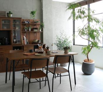 お部屋に素敵な植物があると、洗練されたおしゃれな空間に見えますよね。ガーデニングは少しハードルが高いかもしれませんが、インテリアグリーンやドライフラワー、テラリウムなどの植物なら、室内で気軽に楽しむことができますよ。