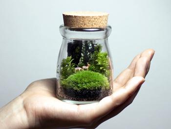 ガラス瓶などの容器の中で植物を栽培する「テラリウム」。植物だけでなくオブジェなどを加えて、独自の世界観を作り出すことができます。