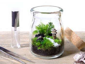 初心者さんには、丈夫で育てやすい苔を使ったテラリウムがおすすめ。土台となる炭や砂利、土の上に苔を並べ、お好みの装飾品を加えるだけで完成です!日常のお世話は、定期的に霧吹きをしてあげるだけでOK。瓶の形や苔の上に置く装飾品をアレンジして、オリジナルの世界観を表現してみましょう。