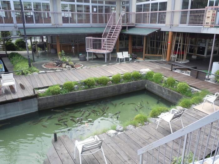 琵琶湖まで歩いていけるロケーションが魅力的な『松水』では鮎や鯉の「養殖」もされていて、「鮎の手づかみ」体験ができ、捕えた鮎を焼いて食べることができます。  中央の「釣り堀」では、「鯉」も釣れますよ。