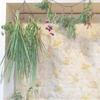観葉植物や鉢植えのグリーンとはまた違った魅力のハーブリース。お好きなハーブで、自分好みにハンドメイドして、お部屋にさり気なく飾ってみませんか?